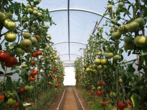 invernaderos de jardín